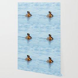 Eared Grebe Wallpaper