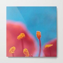 Flower stamens red blue Metal Print