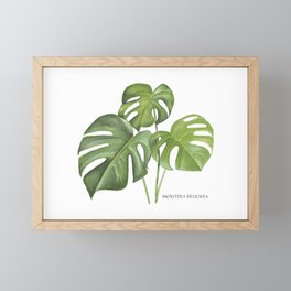 Monstera deliciosa 3 Leaves Framed Mini Art Print