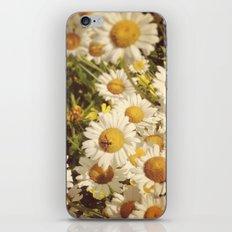 Garden Daisies iPhone & iPod Skin
