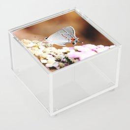 Gray Hairstreak Butterfly Acrylic Box