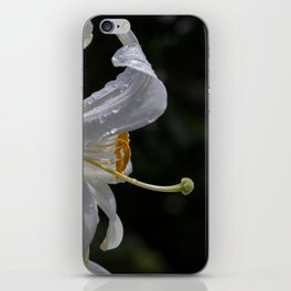 Raindrops on lily flower iPhone Skin