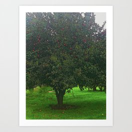 Apple Tree With Red Ripe Apples Art Print