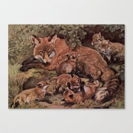Vintage Fox and Cuba Painting (1909) Canvas Print
