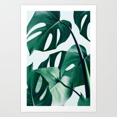 Monstera #society6 #artprints #buyart Art Print