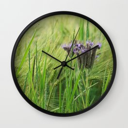 phacelia in a barley field Wall Clock