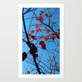 Fall Leaves 2 Art Print