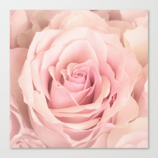A rose is a rose - Wonderful pink Rose flower Canvas Print
