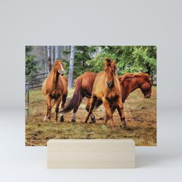 Horse Play Mini Art Print