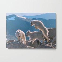 Kids - Mountain Goats Metal Print