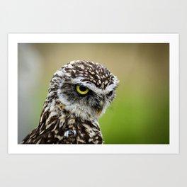 Burrowing Owl Little Art Print