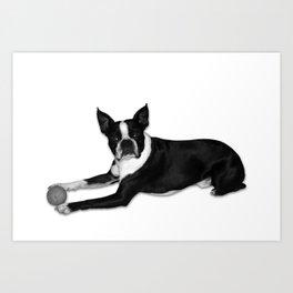 Fetch Boston Terrier B/W Art Print