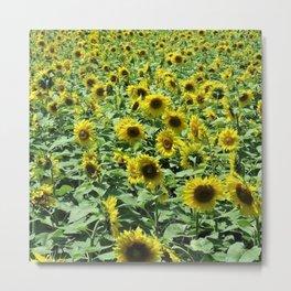 Sunflowers all day, everywhere, all around by Jéanpaul Ferro Metal Print