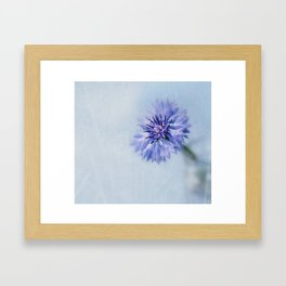 Cornflower Dreams Framed Art Print