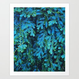 Beautiful Blue Green Selaginella Uncinata Peacock Moss Art Print