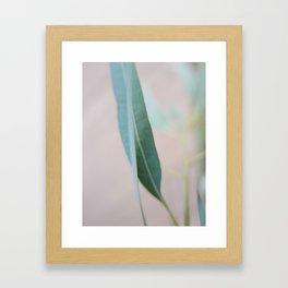 Eucalyptus leaves in the park Framed Art Print