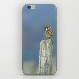 Passerotto-young sparrow iPhone Skin