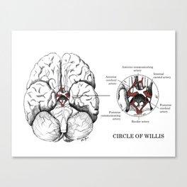 Circle of Willis Canvas Print