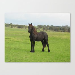 Nemo2 Friesian Canvas Print