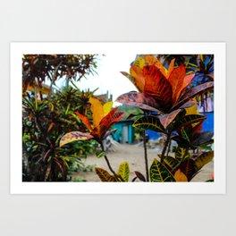Dreamy Mexican Garden Art Print