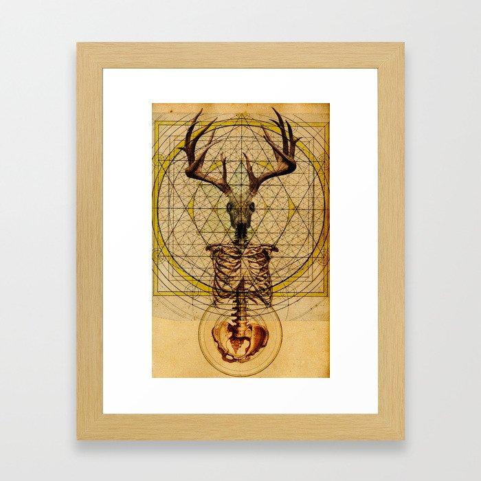Anteocularis V Framed Art Print