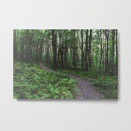 Forest Trail XXVIII Metal Print