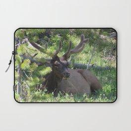 Buck Elk Deer With Velvet Horns at Yellowstone National Park Laptop Sleeve