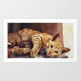 Morning cat Art Print