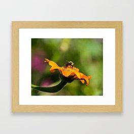 Balancing Bumblebee Framed Art Print