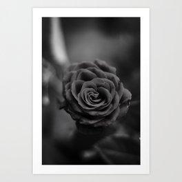 Black rose flowers botanical dark plants Art Print