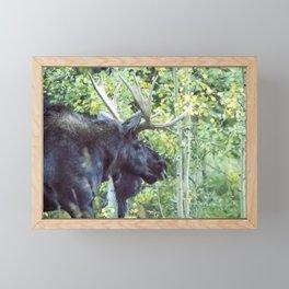 Bull Moose Against a Backdrop of Aspens Framed Mini Art Print