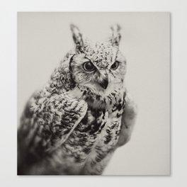 Owl   Fig. 03 Canvas Print