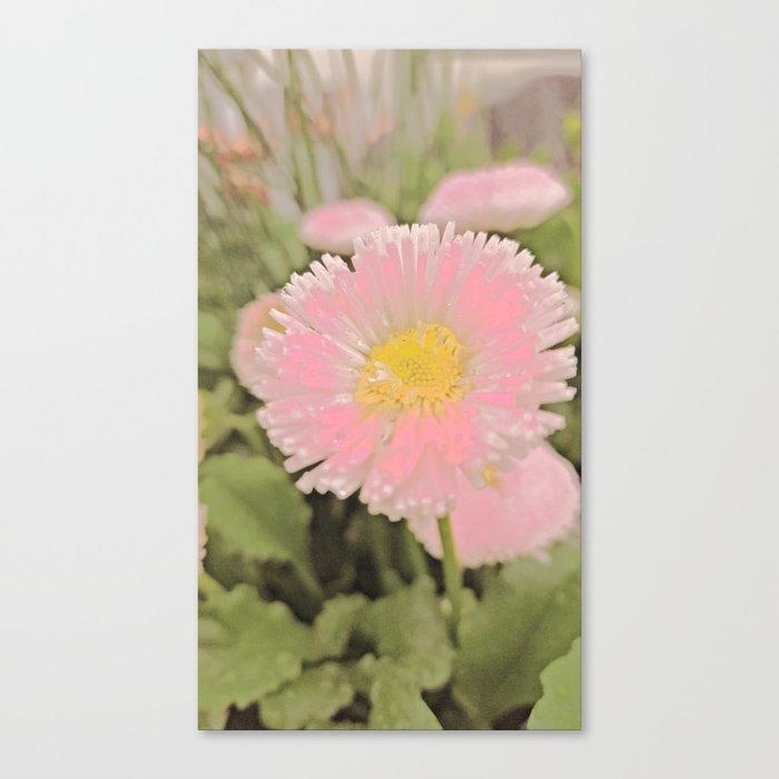 The Singular Beauty Of A Daisy Canvas Print