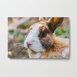 Rabbit in a natural park on the French Riviera Metal Print