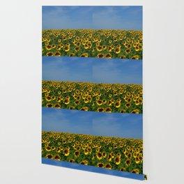 Sunflowers meet the sky 8819 Wallpaper