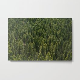 Colorado Pine Forest Metal Print