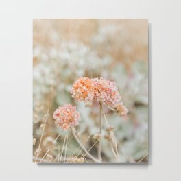 Blooming in the Dunes Metal Print