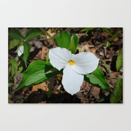 White Trillium by Teresa Thompson Canvas Print
