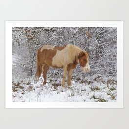 Pinto in the snow Art Print