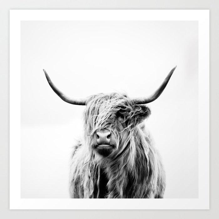 portrait of a highland cow Kunstdrucke