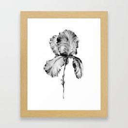 Flower Painting | Iris | Minimalism | Black And White | Rustic | Art Print Framed Art Print