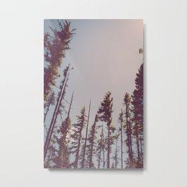 Forest Treetops Metal Print