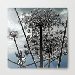 Queen Anne's Lace from a bug's view Metal Print