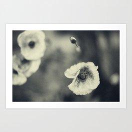 Poppy 4 Art Print