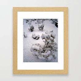Snow Pods Framed Art Print
