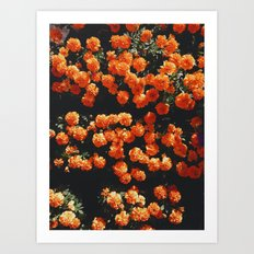 Orange Bloom Art Print