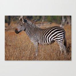 Zebra in the sunlight, Africa wildlife Canvas Print