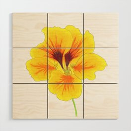 Indian cress flower - illustration Wood Wall Art