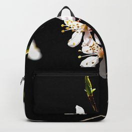 Small Twig Of A Japanese Apricot Tree. White Sunlit Flowers. Black Background Backpack