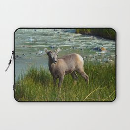 Baby big horn sheep in Jasper National Park Laptop Sleeve